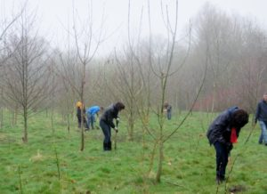 News – Page 6 – Birmingham Trees for Life